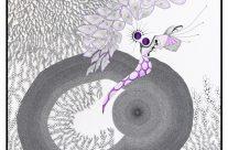 La crevette violette